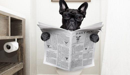 【犬の便秘に良い食べ物&食事】原因と解消法!症状によっては要注意