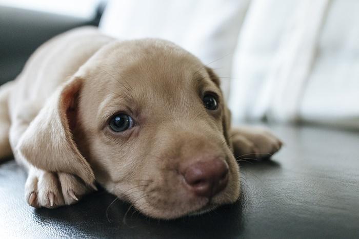 犬が食べ物を吐く原因って?その危険性と対処法