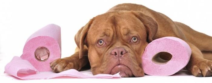 犬の便秘の原因と解消法!症状によっては重大な病気の場合もあるので注意