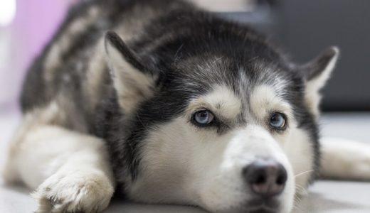 犬の去勢&避妊の費用・時期・方法って?手術後に性格が変わるのは本当か