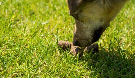 犬の食糞対策サプリおすすめ比較ランキング!なぜ犬はウンチを食べるのか