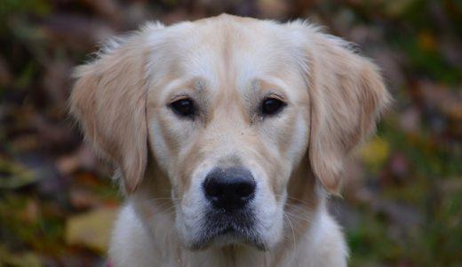 犬の下痢におすすめなサプリランキング!原因と対処法とサプリの選び方