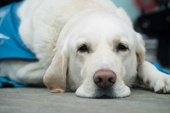 犬用のアトピー改善サプリメントまとめ