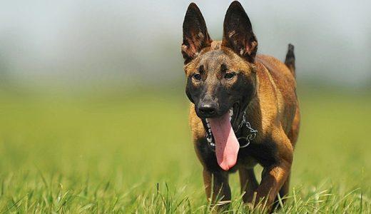愛犬の健康に最適なドッグサプリおすすめランキング!長生きの秘訣はサプリにあり