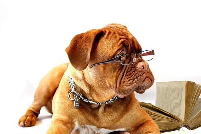 【長生き】老犬の健康維持サプリメントランキング!悩み別おすすめ9選
