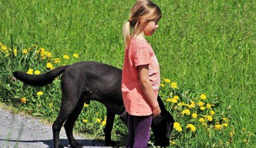 犬のおならが臭いと何かの病気?頻繁に出るおならの原因と対策
