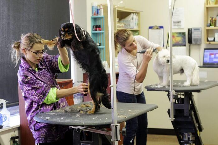 犬の毛艶が良くなるドッグフードおすすめ人気ランキング!被毛をツヤツヤにする方法