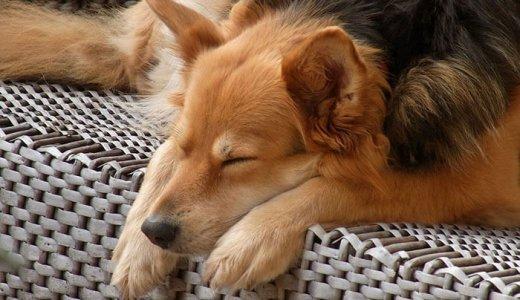 犬の乾燥肌対策と保湿ケア!保湿剤を上手に使ってフケ・肉球ひび割れ対策をしよう